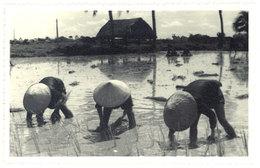 Cpa Carte-photo Cochinchine / Vietnam - Pose De Plants De Riz - Viêt-Nam