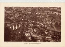 ALPES Mtmes, VENCE: CULTURES D'ORANGERS, Planche Densité = 200g, Format 20 X 29 Cm, (Maniezzi) - Documents Historiques