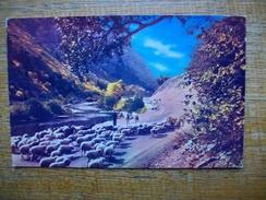 états-unis , Utah Sheep , Utah Cayons - Autres