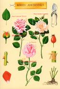 France.bloc No 24 De 1999.roses Anciennes.n**. - Sheetlets