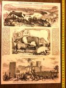 GRAVURE 1860 CONCOURS REGIONAL D AVIGNON LE CHAMP DE COURSE ET ASCENSION AEROSTATIQUE DE M GODARD DES DOMS DE LAURENS - Collections