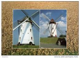 KOEKELARE (W.Vl.) - Molen/moulin - Twee Maal De Gerestaureerde Hovaeremolen Tegen Een Achtergrond Van Graan (1997) - Koekelare