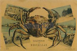 MARSEILLAN - N° 405 - SOUVENIR DE MARSEILLAN - Marseillan