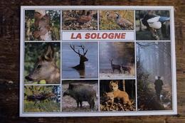 41, EN SOLOGNE, MULTI-VUES, LES ANIMAUX DE SOLOGNE - Animaux & Faune