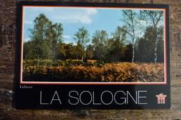 41, EN SOLOGNE, LA LANDE EN AUTOMNE - France