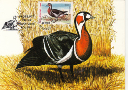 54268- RED BREASTED GOOSE, MAXIMUM CARD, 1990, ROMANIA