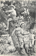 Dans Les Branches - 3 Enfants Dans Un Arbre - Photo J. Fabre - Carte Non Circulée - Scene & Paesaggi