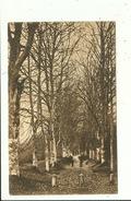 Weillon Namur Série Arbres Remarquables ( Adressé Au Professeur Rossignol De L'Athénée De Chimay ) - Namur