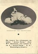SUISSE  SWIZTERLAND GENEVE PUBLICITE LAPINS LAPIN  MONTALEGRE - GE Genève