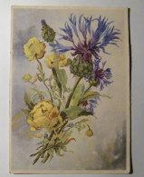 Kt 753 / Troll Blume, Berg Flockenblume - Fleurs