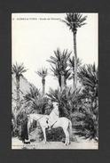 ALGÉRIE - AFRIQUE - SCÈNES ET TYPES - ÉTUDE DE PALMIERS - CHEVAL BLANC - WHITE HORSE - PAR COLLECTION IDÉAL P.S. - Algérie