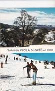 VIOLA ST. GREE  -VG AUTENTICA 100% - Cuneo