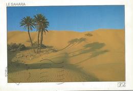 T1776 The Sahara Desert - Deserto / Viaggiata 1996 - Cartoline