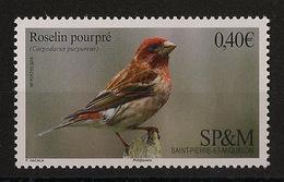 SPM - 2016 - Roseline Pourpre - Neuf Luxe ** / MNH / Postfrisch - Sparrows