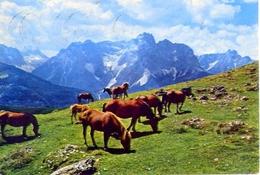 Sextner Dolomiten - Cavalli Al Pascolo - 489 - Formato Grande Viaggiata Mancante Di Affrancatura - E - Unclassified