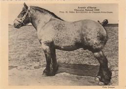 Chaussée Notre-Dame (Louvignies ) ,cheval De Trait ,Avenir D'Herse,1925 ,prop Valère Bourdiau - Soignies