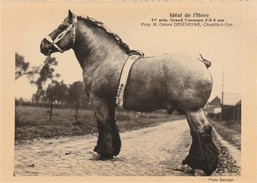 Chapelle-à-Oye (Leuze En Hainaut) ,cheval De Trait ,Idéal De L'Hove,prop Octave Desénepar,concours Des 2,3,4 Ans - Soignies