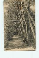 DIGNE : Couvent De St Domnin, Allée Et Grotte. 2  Scans. Edition Sicard - Digne