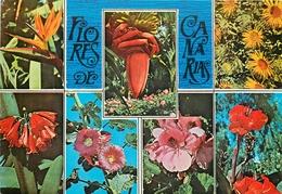 CPSM Flores De Canarias      L2316 - Espagne