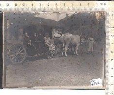 PO6531D# FOTOGRAFIA GRUPPO AGRICOLTORI SU CARRO BUOI RICORDO Primo '900/AGRICOLTURA - Mestieri