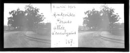 H0278 - URUGUAY - MONTEVIDEO - Prado Allée D' Eucalyptus 8 Aout 1912 - Plaques De Verre