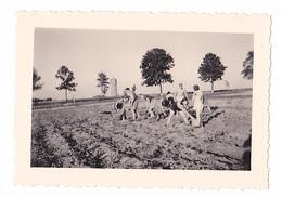 25967 Quatre 4 Photo BELGIQUE  - Camp Ecole  -scout -scoutisme - Entre1943  45-cuisine Recolte Pomme De Terre Patate