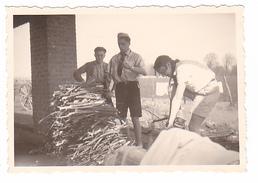 25970 Quatre 4 Photo BELGIQUE  - Camp Ecole  -scout -scoutisme - Entre 1944 Et 45 Ferme Coupage Bois - Guerre, Militaire