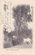Esneux - Ponceau Vers Rosière (animée, Vache, Précurseur, 1905) - Esneux