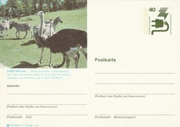 1976 GERMANY Postal STATIONERY CARD Illus OSTRICHE, ZEBRA At MUNSTER ZOO  Cover Stamps  Bird Birds