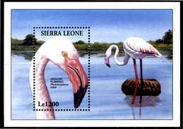 SIERRA LEONE 1994** - Uccelli / Birds - Fenicottero Rosa - Block MNH Come Da Scansione