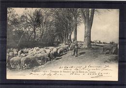 Brignoles - Troupeau De Moutons Au Bord Du Caramy - Brignoles
