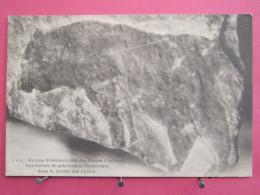 24 - Les Eyzies - Bas Reliefs Magdaléniens Découverts Dans La Grotte - Très Bon état - Scans Recto-verso - France