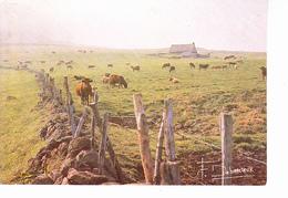 AUVERGNE EN MAJESTE, Buron En Auvergne, Maison De Pierre, Vaches, Photo Francis Debaisieux 1982 - Auvergne
