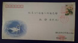 Whooper Swan,China 2001 Hubei New Year Greeting Post Stationery Envelope