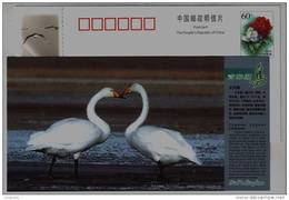 Cygnus Cygnus,whooper Swan,CN 05 Bird Kingdom Qinghai Salt-water Lake National Nature Reserve Pre-stamped Card