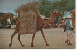 CPA - TYPICAL SCENE KARASCHI SUBURN W. PAKISTAN - CHAMEAU - DROMADAIRE - - Pakistan