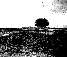 Photo Ancienne Originale Un énorme Tas De Douilles Au Bord Du Chemin  1914 1918 Ww 1 - Guerra, Militari