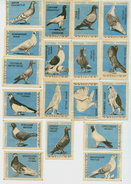 MATCHBOX LABELS RUSSIA CCCP URSS 1960's BIRDS 16 DIFFERENT RACES OF PIGEONS - Old Paper