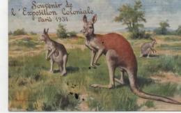 KANGOUROU - Souvenir De L'Exposition ColonialebnParis1931 - Animaux & Faune