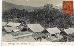 CPA (antilles)  TRINIDAD  Dancing Cocoa - Trinidad