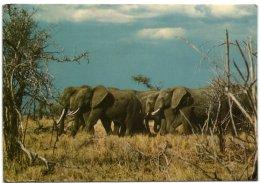 Tanzania National Park - Eléphants - Tanzanía
