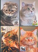 TH_ Belarus 2017 Kittens Kitten Cats Cat Fauna 4 MaxiCards MC - Katten