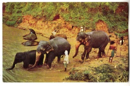 BY71. Vintage Postcard. Elephants Bathing Near Kandy, Ceylon. Sri Lanka - Elephants