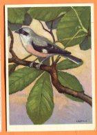 HA603, Laniidae, Lanius Minor, Pic - Grièche à Poitrine Rose, 473, GF, Circulée 1958 Sous Enveloppe - Vogels