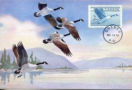 17303  Canada,  Maximum 1954 Quebec,  Gooses, Gans, Oies