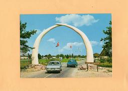 Carte Postale -SAFARI PARK  BEEKSE BERGEN HILVARENBEEK BIJ TILBURG - Netherlands