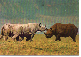 Animaux.. Rhinocéros - Rhinocéros