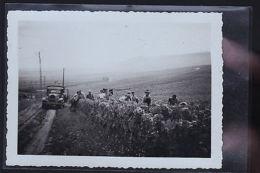 VENDANGES A SITUER 1940 PHOTO - Cartes Postales