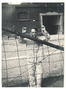 Photo Amateur : Homme En Tenue à Rayure Dans Camp, Prisonnier, Ww2 ? - Guerre, Militaire