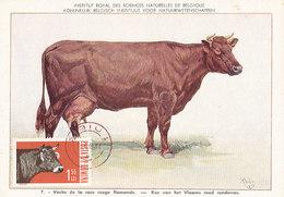 D28474 CARTE MAXIMUM CARD 1963 ROMANIA - VACHE COW CP MUSEUM ORIGINAL
